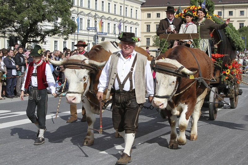 Munich, Germany - September 22, 2013: historical beercart pulled by two oxen with the patron of the beer tent L?wenbr?u brewery on the float in ludwigstra?e munich at grand parade of oktoberfest.